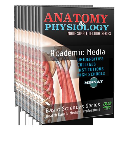 Human anatomy dvd